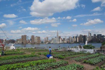 Les fermes urbaines