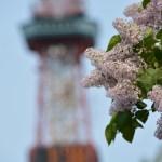 札幌の初夏の大イベントYOSAKOIソーラン祭りとは?