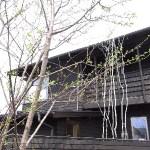 3本の桜がある家