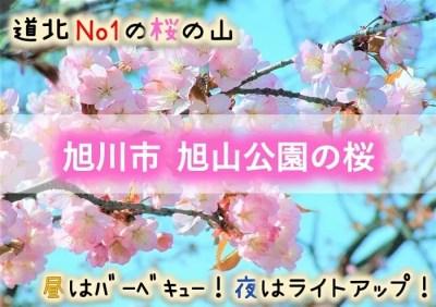 旭川市 旭山公園の桜