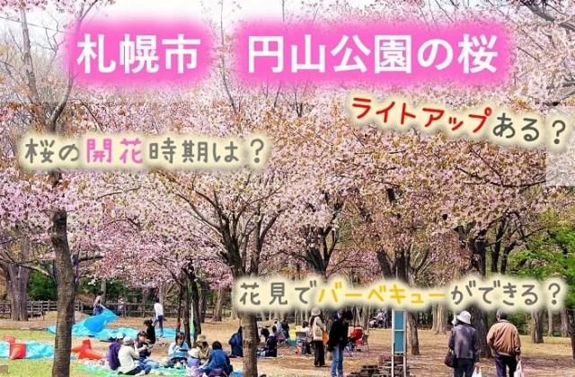 札幌市 円山公園の桜