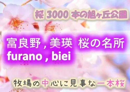 富良野市、美瑛町 桜の名所