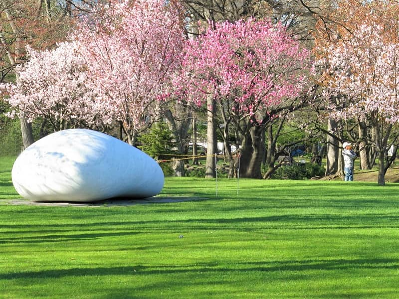 知事公館の桜