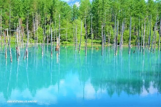 美瑛町の青い池