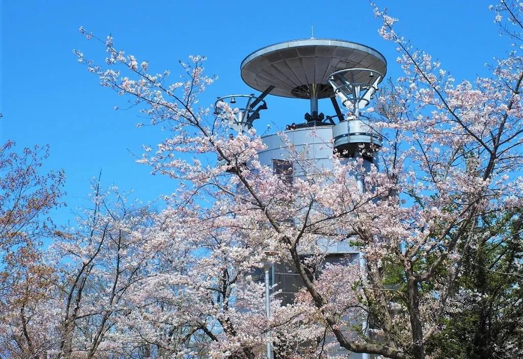 【美唄市】東明公園の桜は日本最北のソメイヨシノが咲く公園!