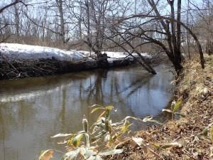 春の湿原河川