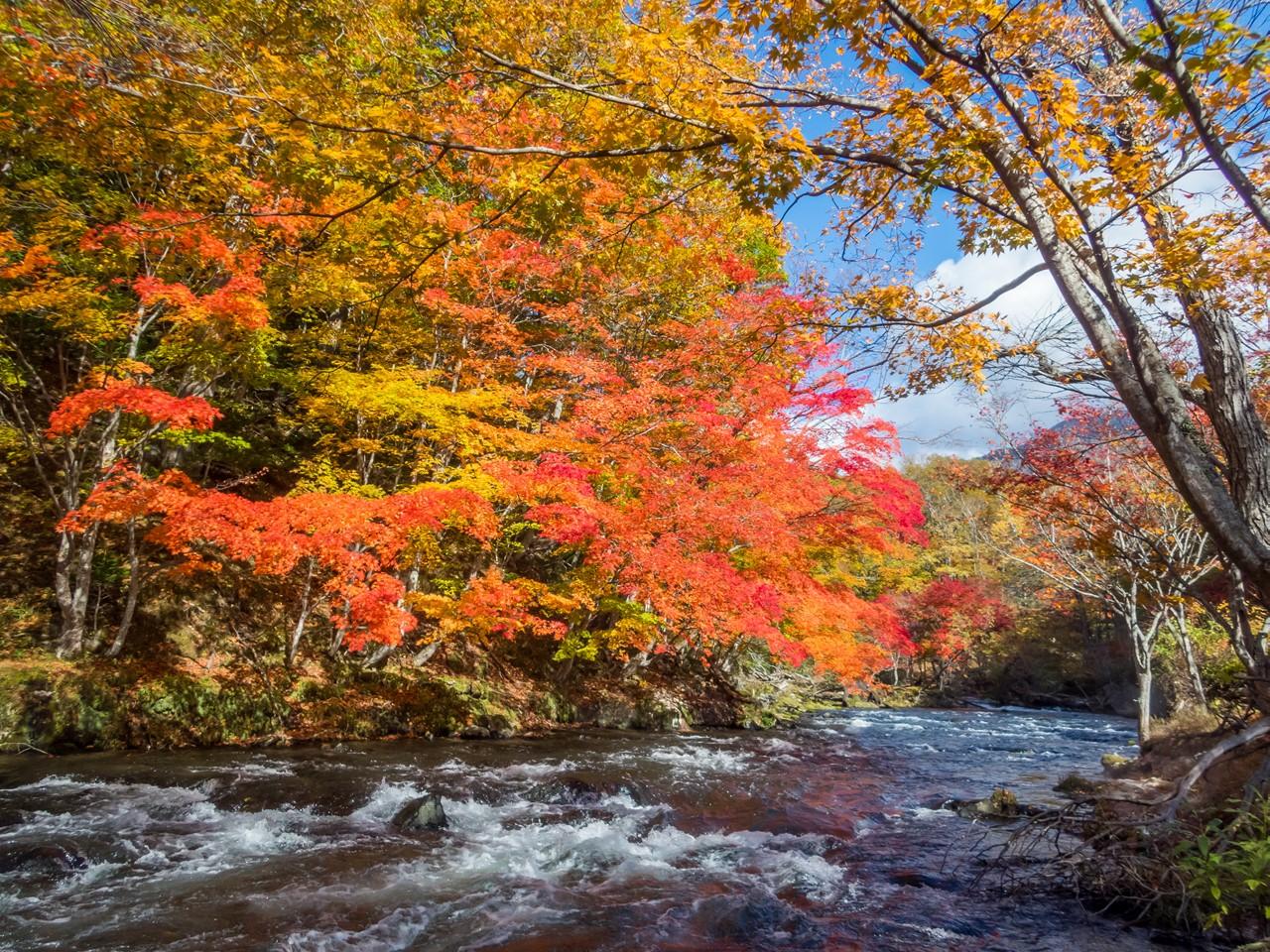 秋の阿寒川