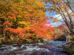ニジマス釣りにおすすめの道東河川!秋の絶景阿寒川!