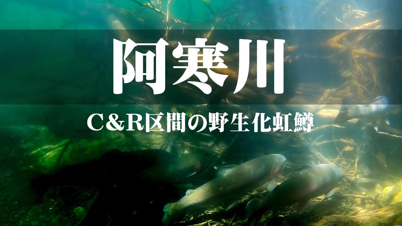 【阿寒川】野生化した虹鱒ワイルドレインボーの調査【C&R区間】