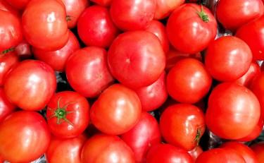 ドライトマトを天日干しで作った時の失敗例と失敗しない作り方