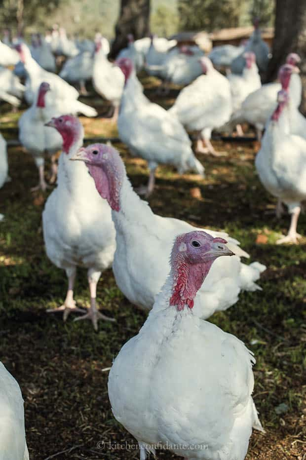 Diestel Turkey Ranch | Kitchen Confidante | Turkeys