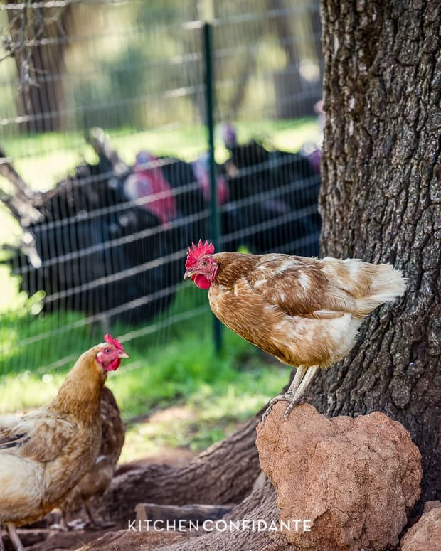 Five Little Things - May 24, 2013 | Kitchen Confidante | Chicken