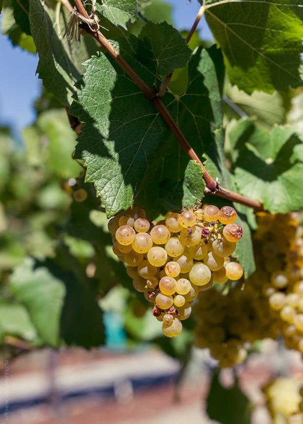 2013 Kendall-Jackson Heirloom Tomato Festival | www.kitchenconfidante.com | Chardonnay Grape