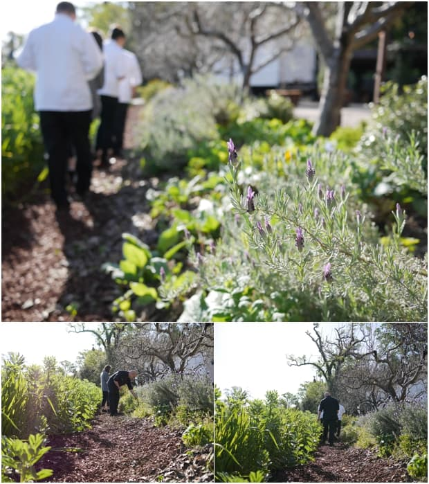 US Highbush Blueberries CIA Bootcamp | www.kitchenconfidante.com | CIA Herb Garden