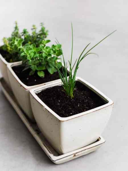 indoor herb garden How to Start an Indoor Herb Garden   Kitchen Confidante®