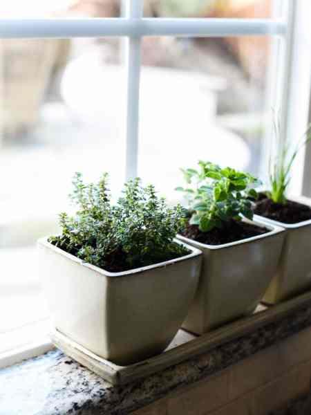 indoor herb garden How to Start an Indoor Herb Garden | Kitchen Confidante®