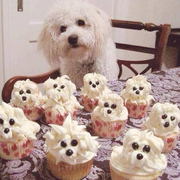 Easy Dog (Poodle or Bichon Frise) Cupcakes...these are the BEST Cupcake Ideas!