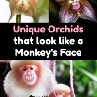 These Rare Orchids Look Just Like Monkeys