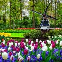 Tulip Virtual Tour