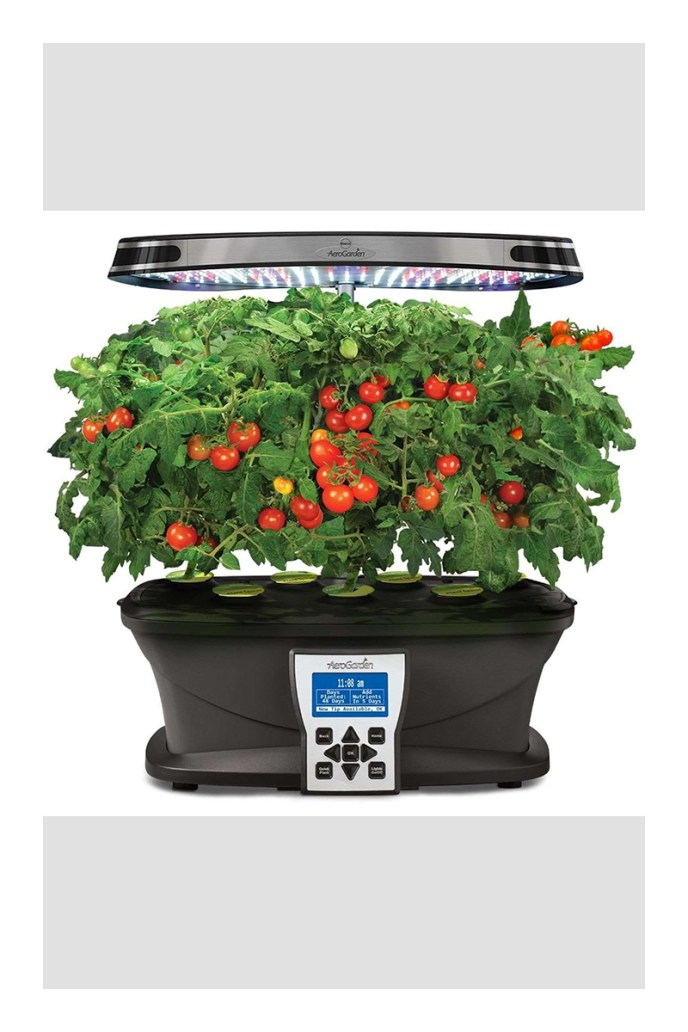 growing tomatoes in pots outside