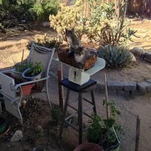 Kittens in the Kitchen Garden