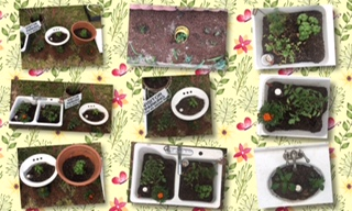 planting herbs and vegetables