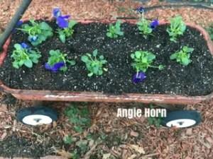 Pansy wagon garden