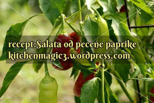 paprika7