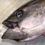 Japanese Street Food – $600 GIANT RAINBOW LOBSTER Sashimi Japan Seafood