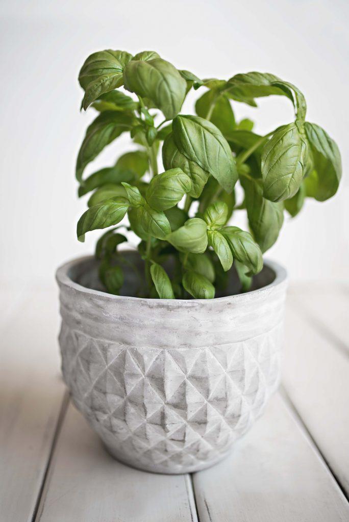 The Rundown On Growing A Kitchen Herb Garden Kitchen Season