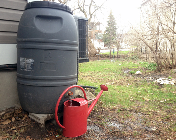 web-rainbarrel