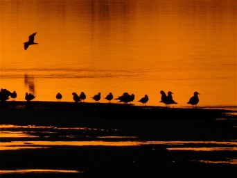 "March 9th, 2016 Gulls returning to Westboro Beach. ""Everyone loves to sit & watch a spectacular sunset."""