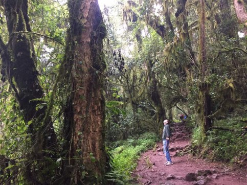 Jacob Hoytema, KT contributor and Uniterra volunteer, on a hike in Mt. Kilimanjaro's forests. Although he spent the summer working in Tanzania, he also took time to visit the main tourist attractions. Photo by Matt Curtis