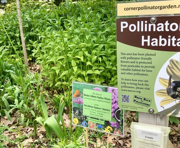 Pollinator garden, Ottawa
