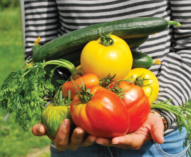 Someone holds a pile of brightly coloured vegetables in a close up stock image