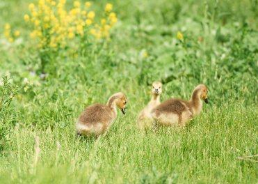 Ducks enjoying their day in the park. Photo by Ellen Bond.