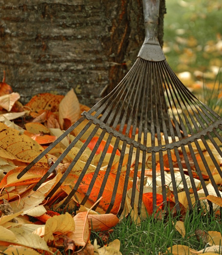 A rake picks up colourful fall leaves with a tree behind