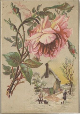 rose_Snow