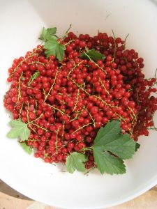 These currants are so pretty I want to make jewelry out of them.