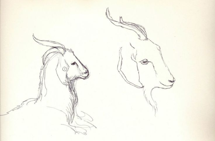 Goats_web