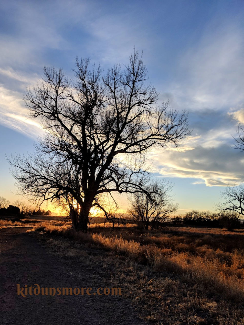 Sunset behind a tree at Barr Lake State Park. Photo by Kit Dunsmore