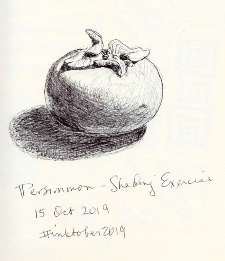 Black and white sketch of a persimmon. By Kit Dunsmore