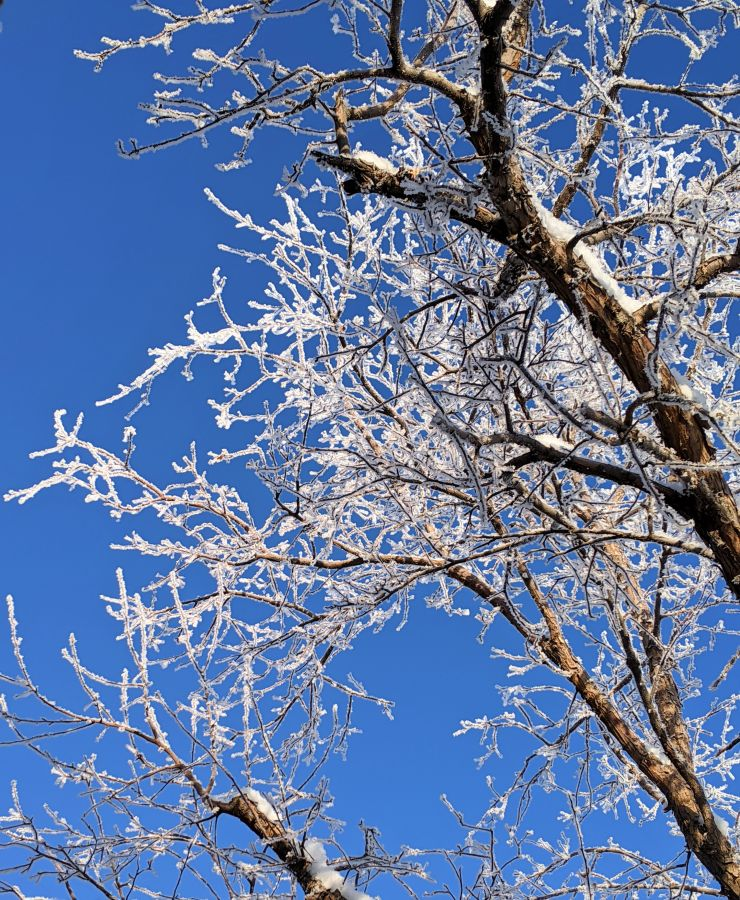 Frost-covered tree branches. Photo by Kit Dunsmore