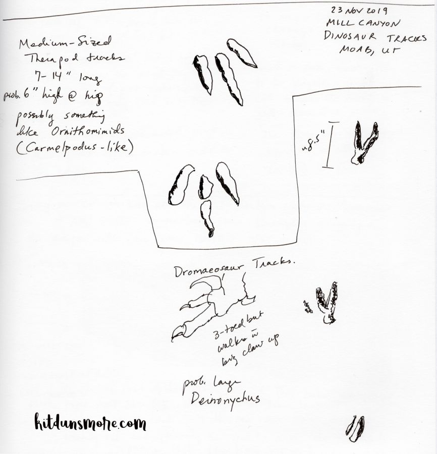 Black-and-white nature journal page by Kit Dunsmore for the Mill Canyon Dinosaur Tracksite near Moab, UT.