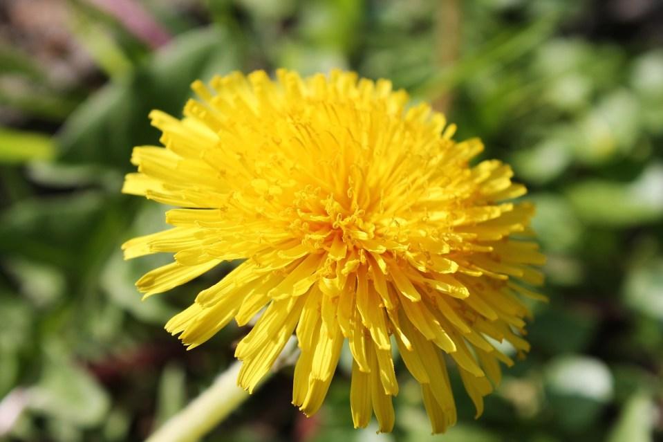 Flower Petals Plant Flora  - Sabine_Zierer / Pixabay
