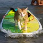 Обучение серфингу и кайтсерфингу во Вьетнаме