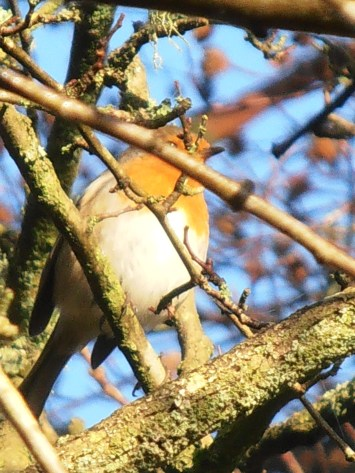 Bird obscured by branch
