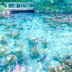 名もなき池がSNS効果で突如大ブレイク『モネの池』