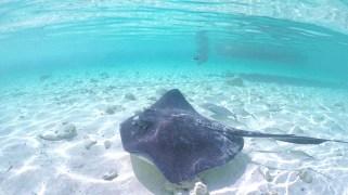 ray underwater