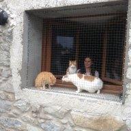 Pension pour chats